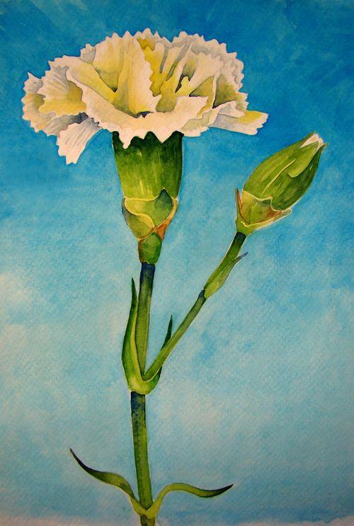 Jan Carnation 2