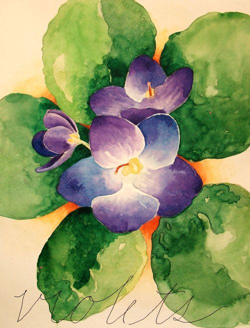 Feb Violets
