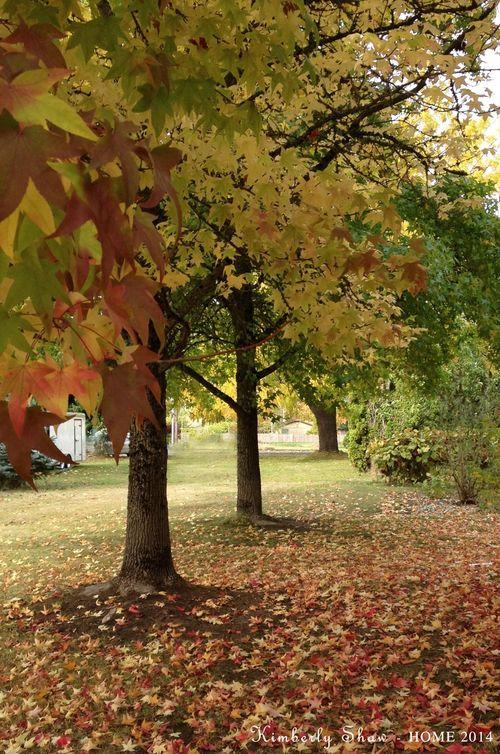 3 Fall trees