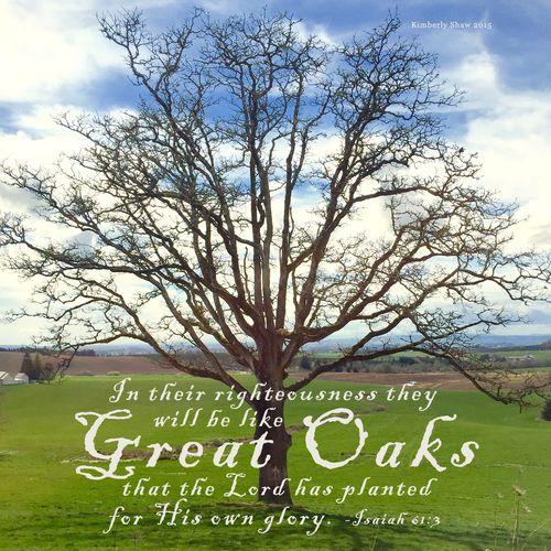 Oak Isa 61 3